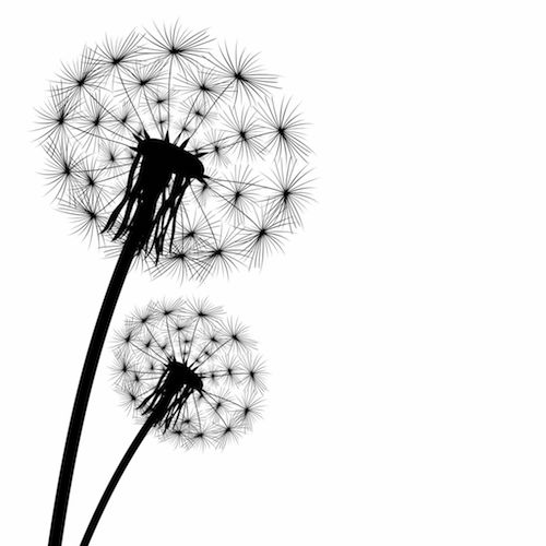 26 Dandelion Tattoo Designs Ideas: Dandelion Tattoo Meaning